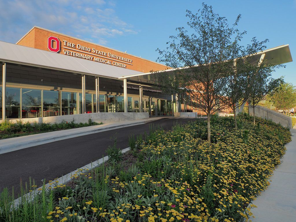 Check out our list of the top 10 veterinary schools in