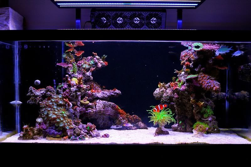 aquascaping ideas and plans saltwater fish aquariums fish tanks and saltwater tank