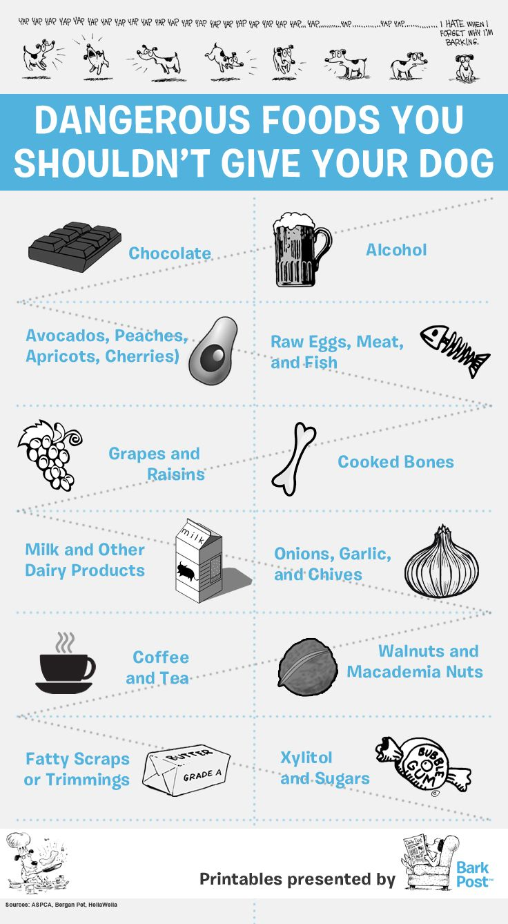 Printable Infographic Everyday Foods That Your Dog Should Avoid