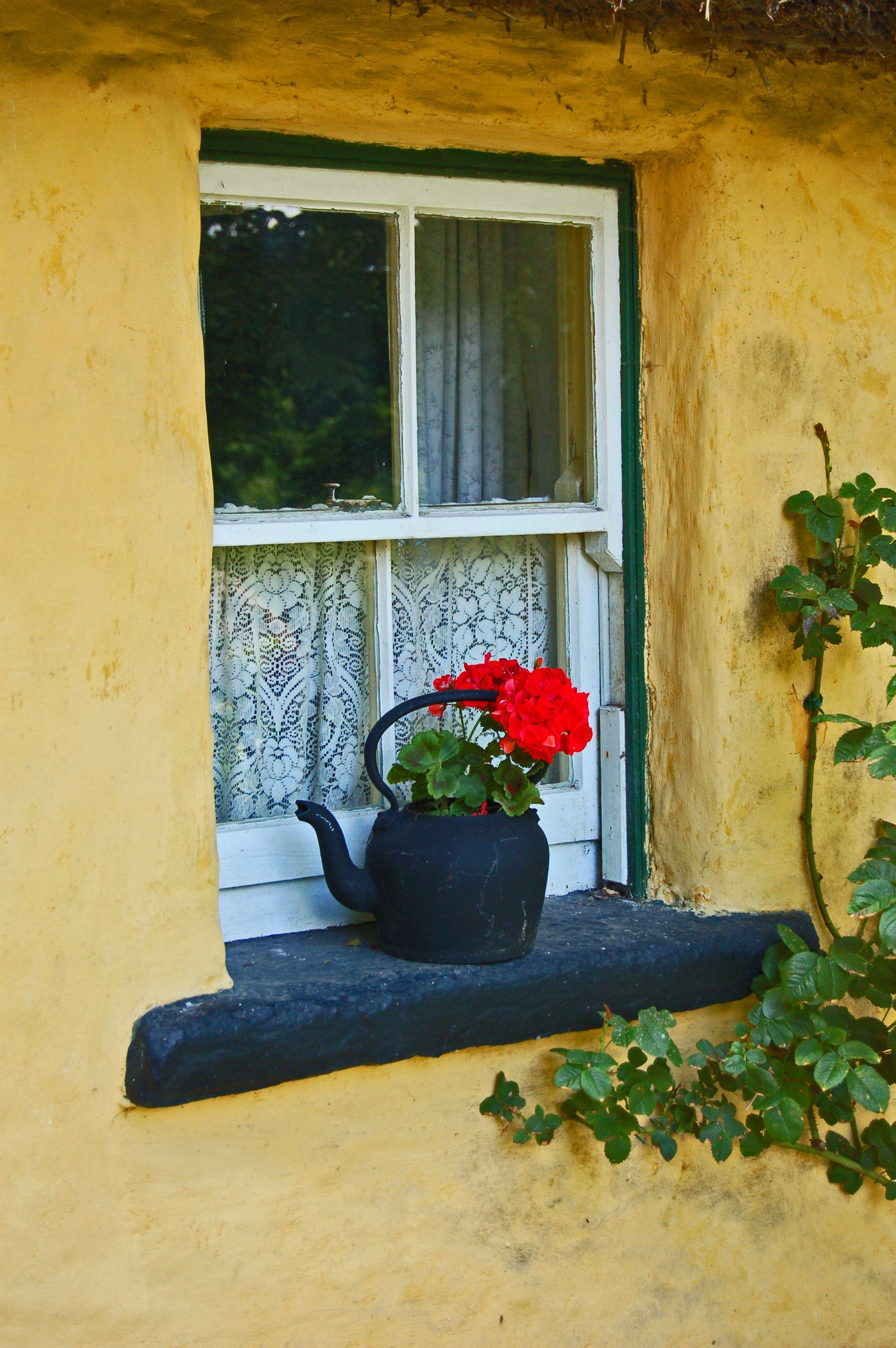 Flower Pot in Window, Ireland. Windows and doors, Window
