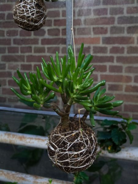 A new idea for hanging plants --using string, from http://www.stringgardens.com/