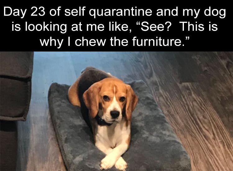 After Dark Funny Meme Dump 36 Pics Funny Dog Memes Funny Stupid Funny Memes