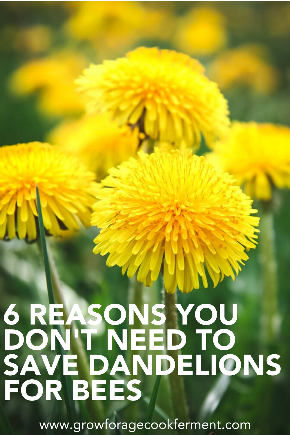 6 Reasons You Don T Need To Save Dandelions For The Bees In 2020 Dandelion Planting Herbs Healing Plants
