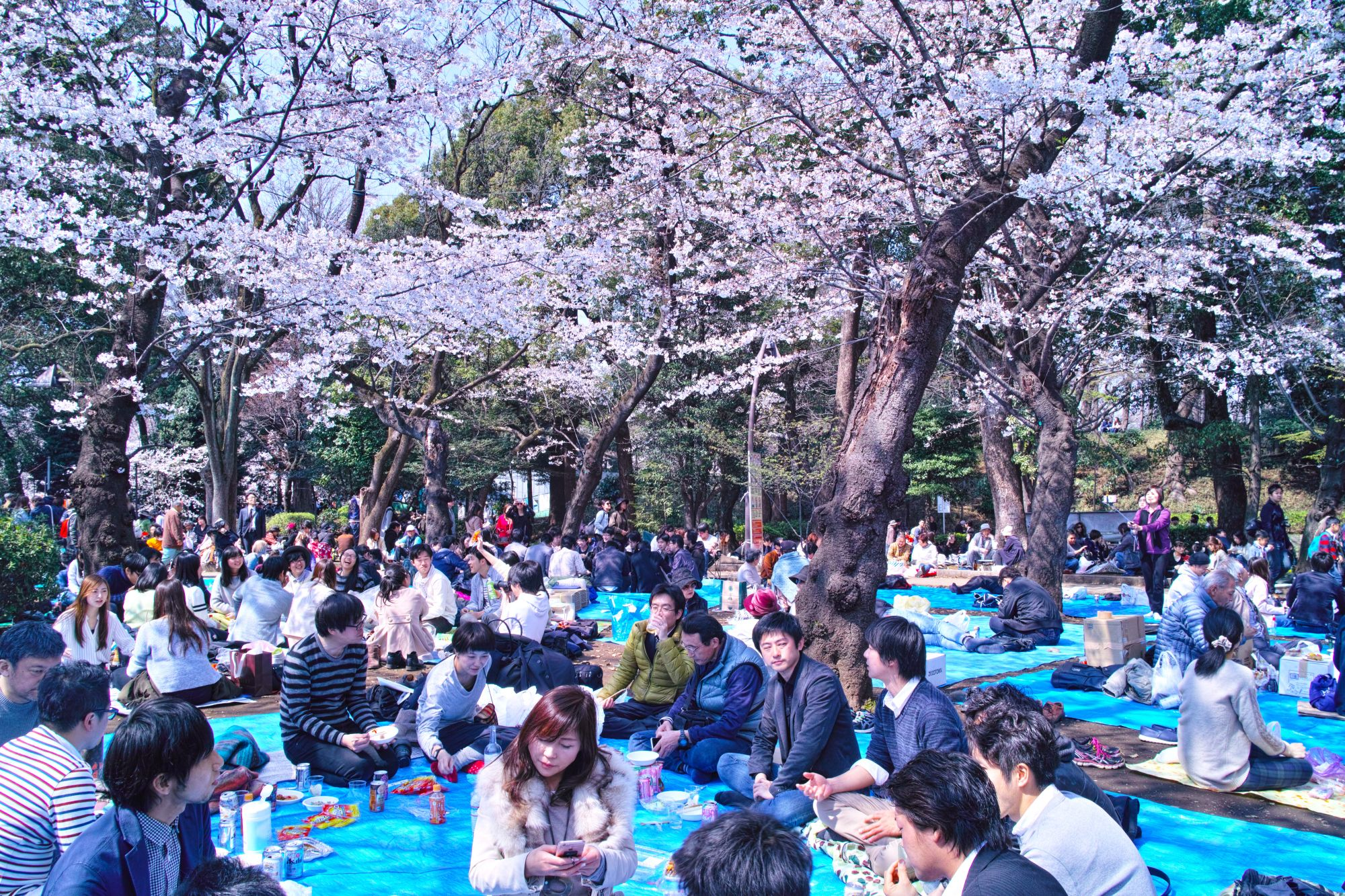 Beautiful Traditional Cherry Blossom Festival In Japan Park Life Japan