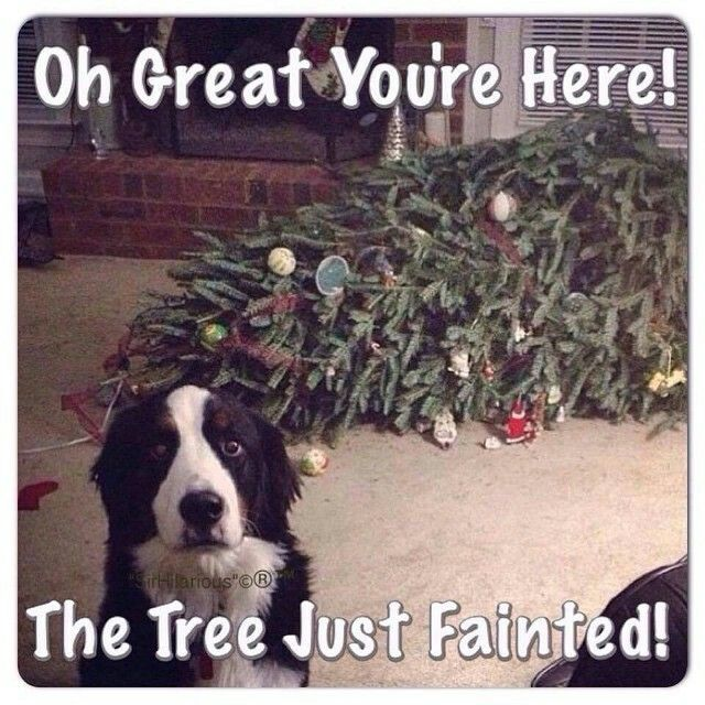 Dang tree! You just can't trust their delicate constitution!