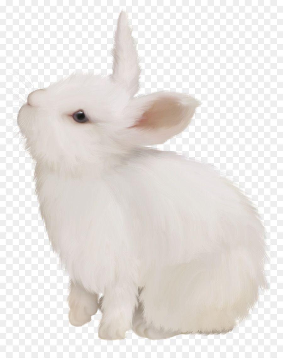Domestic Rabbit White Rabbit Easter Bunny European Rabbit White Cute Bunny Png Is About Is About Fur Rabits A Rabbit Png Domestic Rabbit Rabbit Illustration