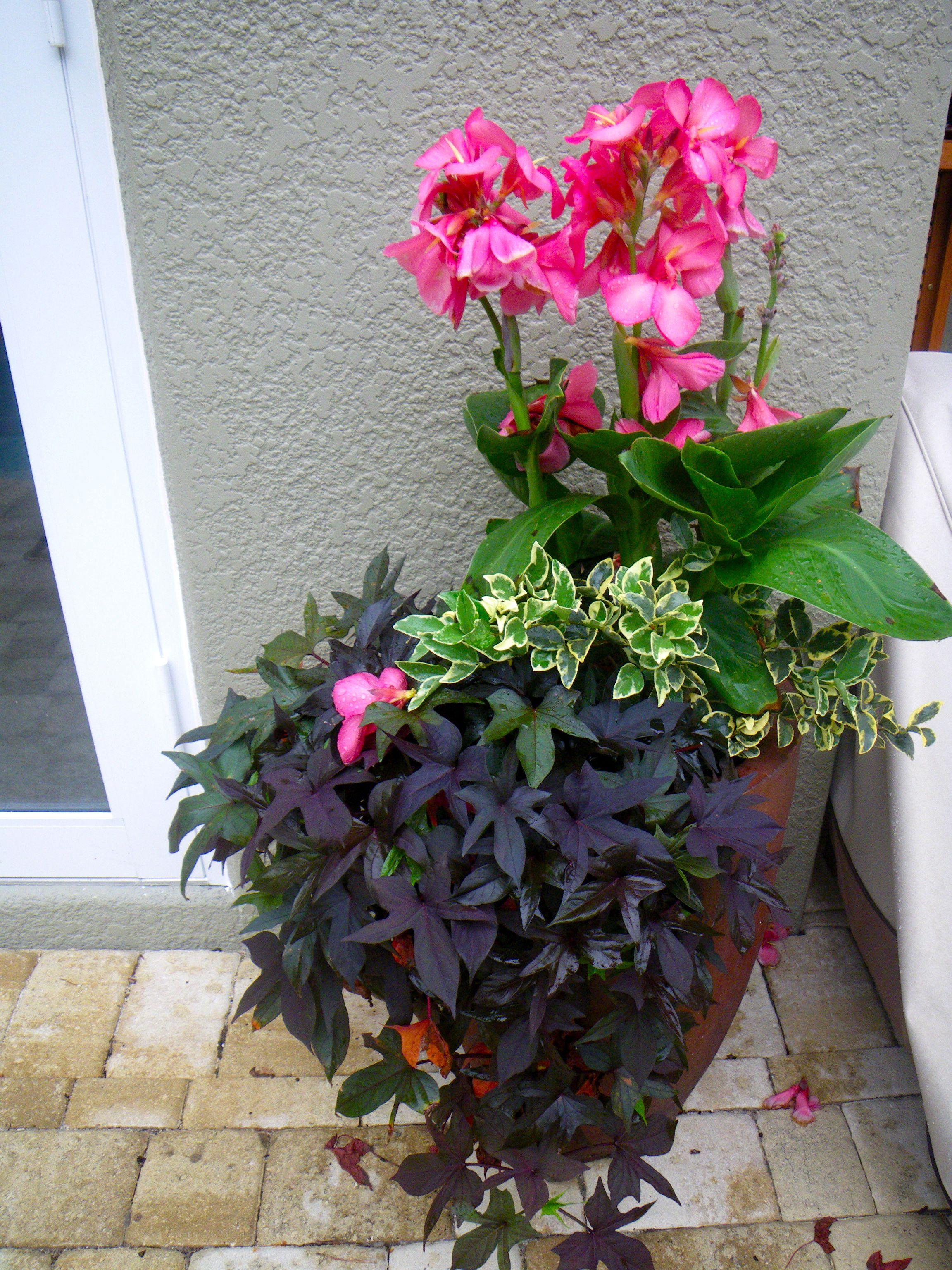canna planter tropical poolside landscaping pinterest planters gardens and plants. Black Bedroom Furniture Sets. Home Design Ideas