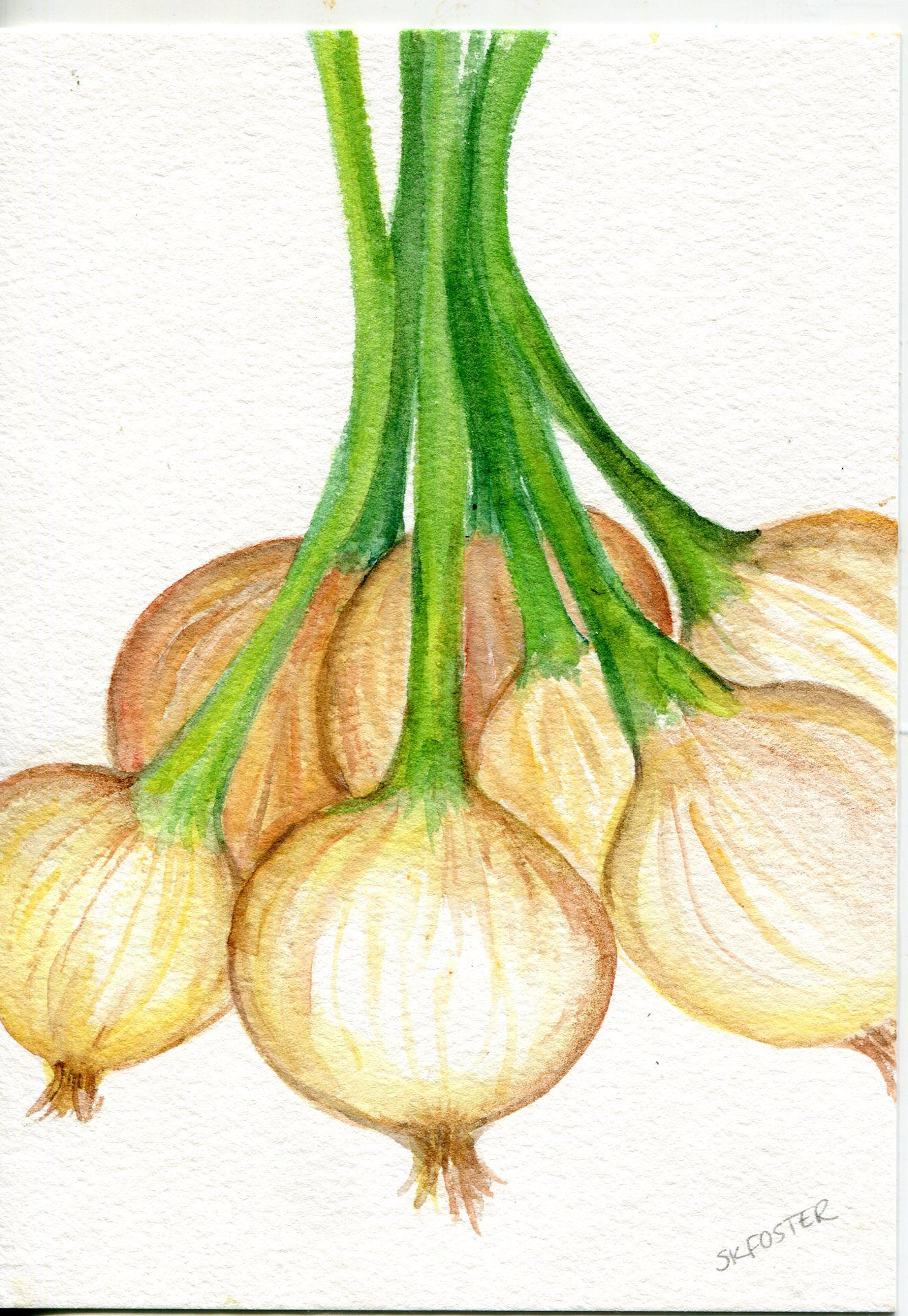 Bunch of Spring Onions watercolor painting original. kitchen decor ...