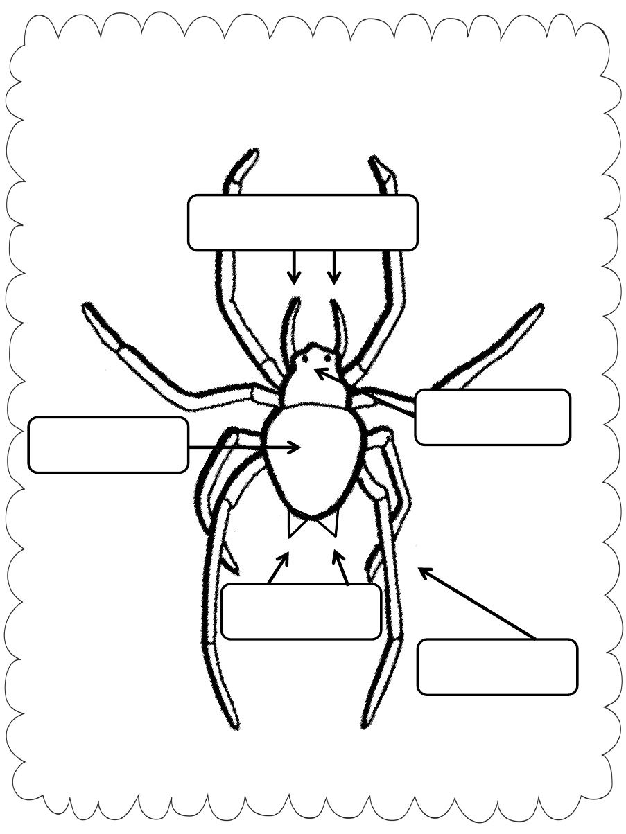 Label parts of a spider - Charlotte\'s Web | Educación | Pinterest ...