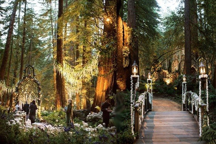 Uplighting In Amber Wash Of Redwood Forest Trees At Outdoor Wedding And Reception Sur