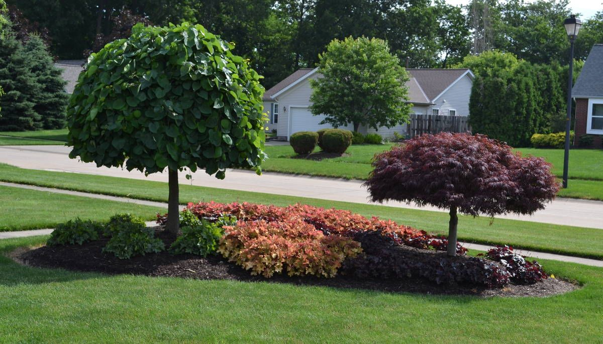 Front yard island landscapes landscaping idea for an for Front lawn plant ideas