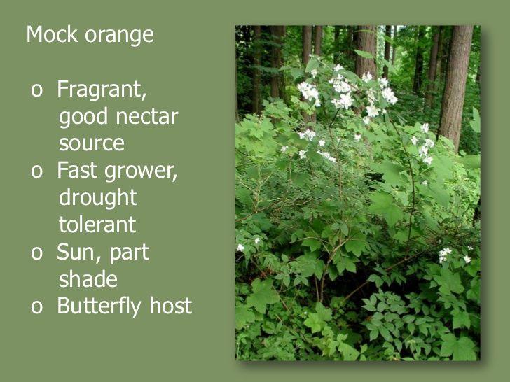 Native Plants To Oregon Part - 30: Native Plants For Oregonu0027S Willamette Valley