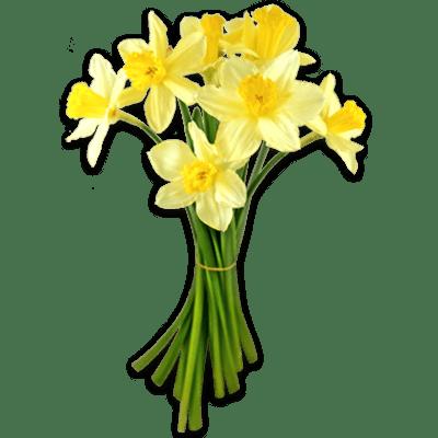 Daffodils Tied Together Daffodils Narcissus Flower Daffodil Flower