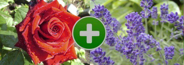 Цветы на клумбе – правильное соседство   Цветы, Клумбы ...