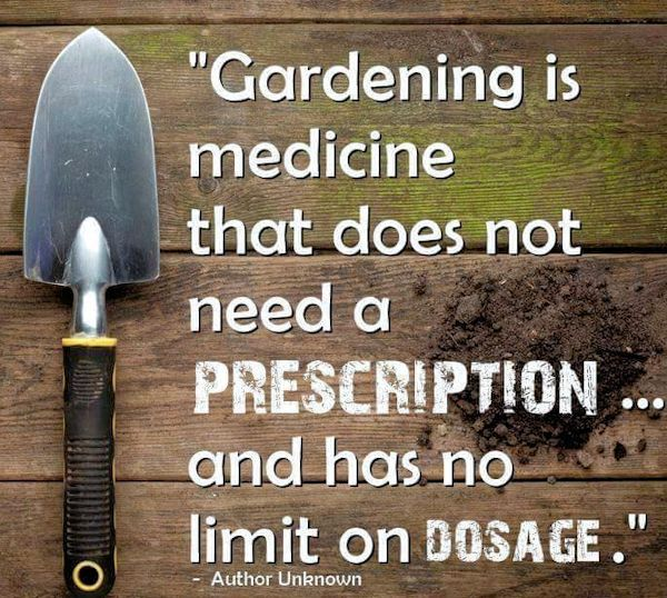 Gardening Is Medicine That Does Not Need A Prescription