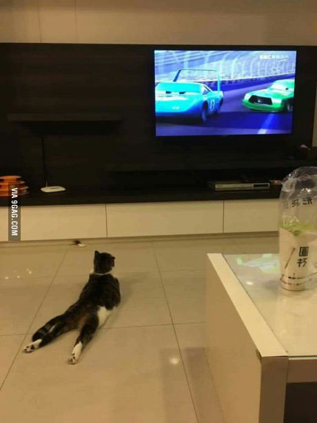This Is How My Cat Watches Tv Lol Cat Watch Crazy Cats Silly Cats