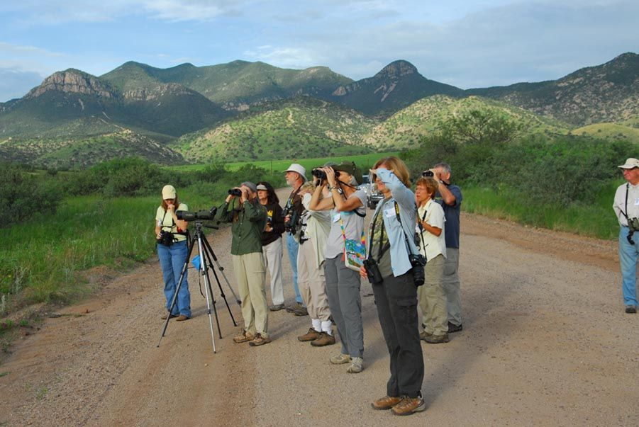 23rd Annual Southwest Wings Birding and Nature Festival: July 30 through August 2, 2014. Another great year of Field Trips, Free Programs, Vendors, Exhibitors and Keynote Speaker, Ed Harper.
