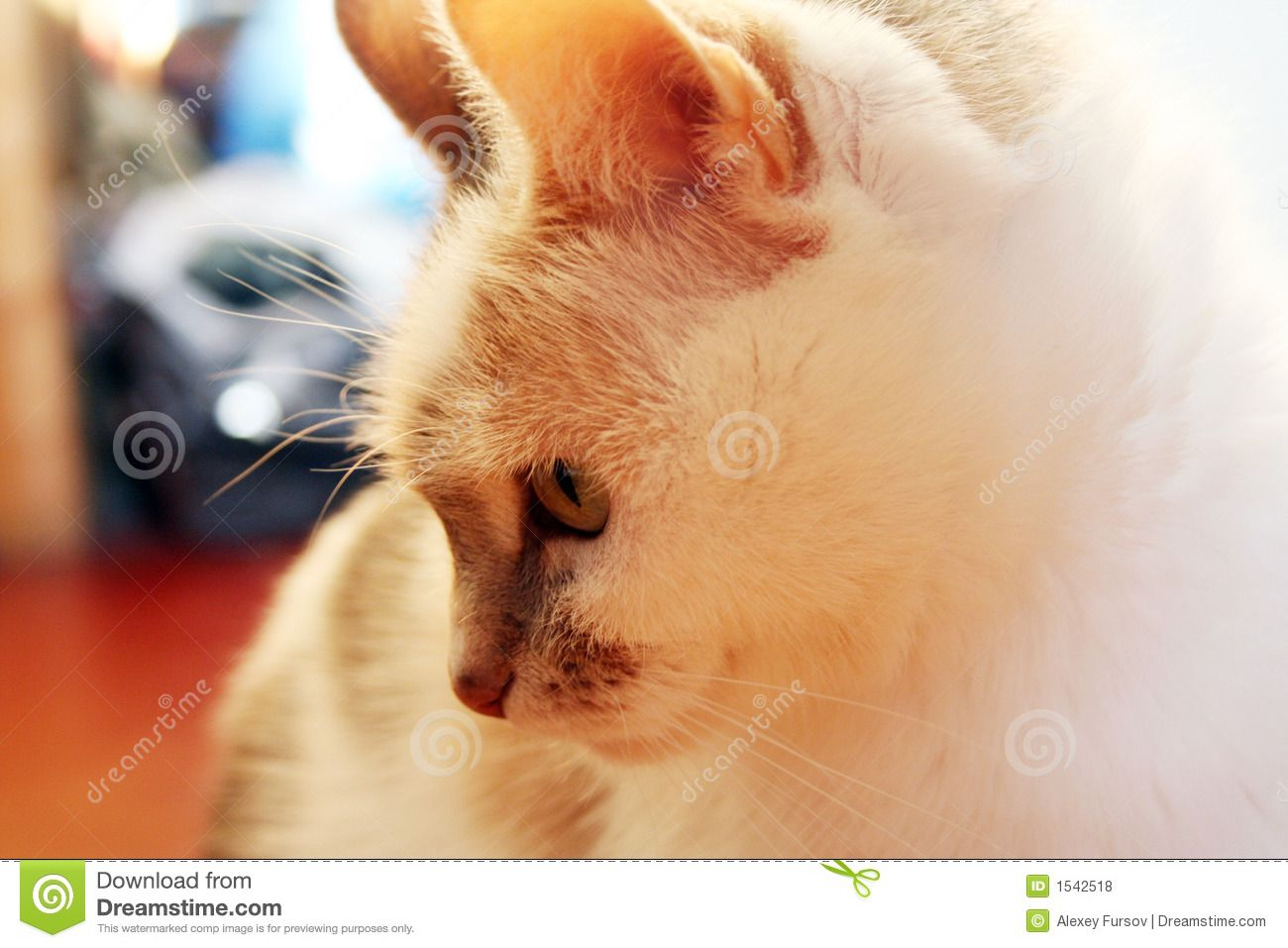 cat download from over 28 million high quality stock photos