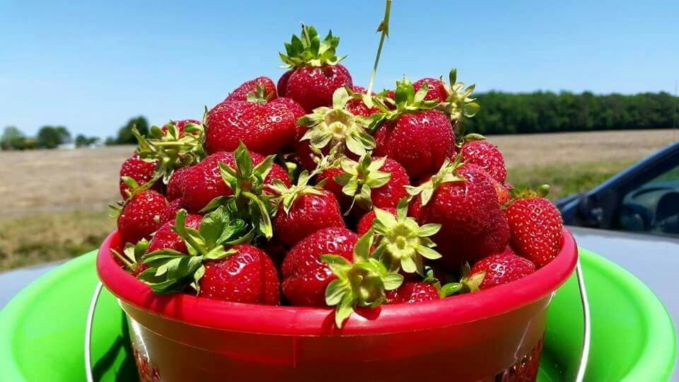 #Strawberry #summer