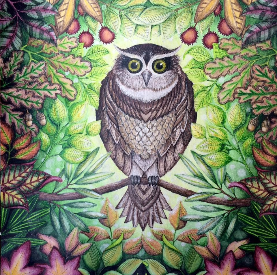 Johanna Basford Coloring Page Owl Coloring Johanna Basford