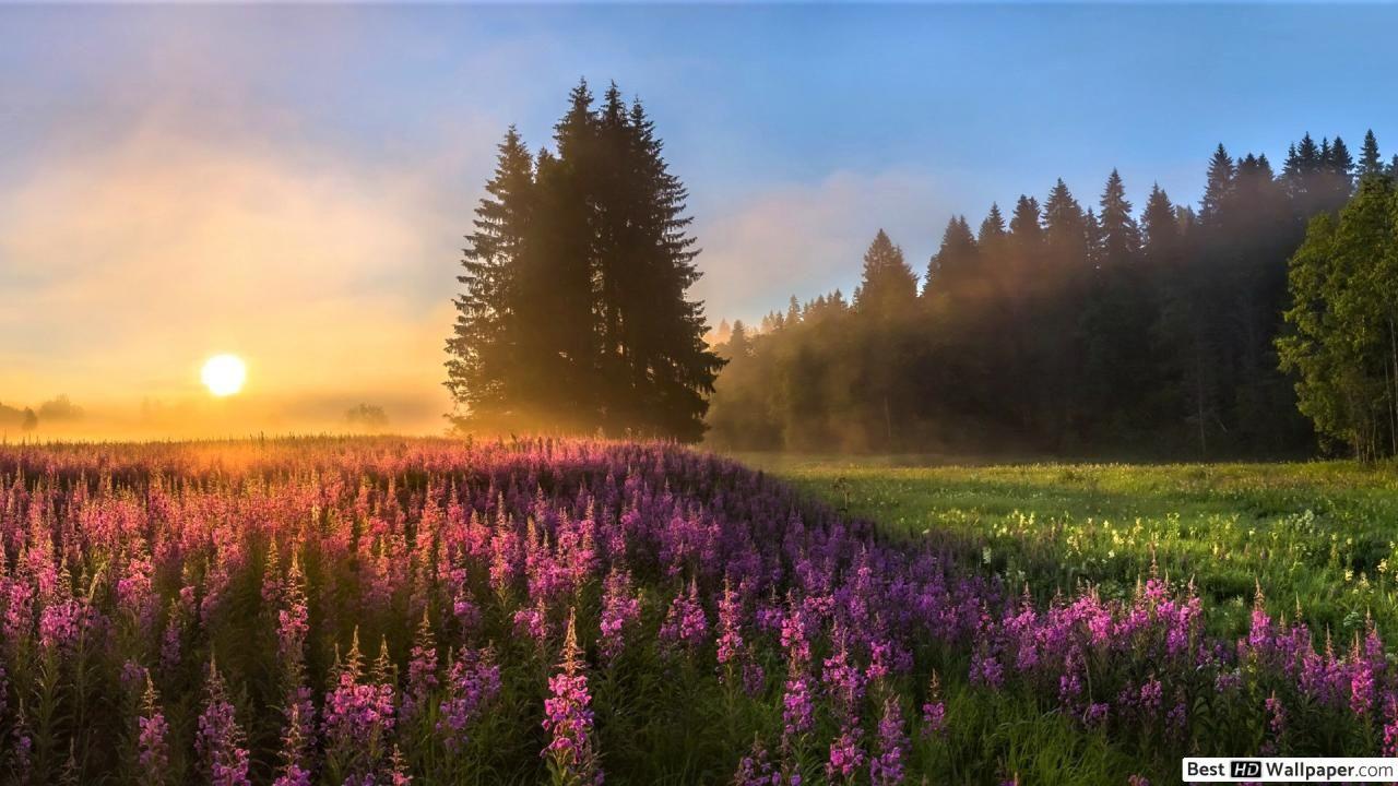 Best Landscape Hd Desktop Wallpapers Cool Landscapes Landscape Nature