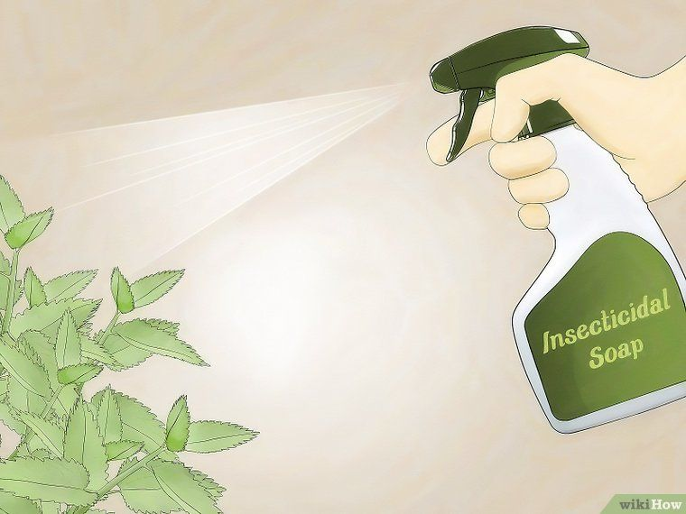 How to get rid of aphids get rid of aphids aphids