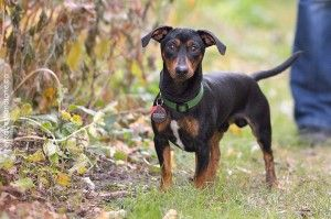 Adopted Hello My Name Is Remi I Came Into Cdr Recently After