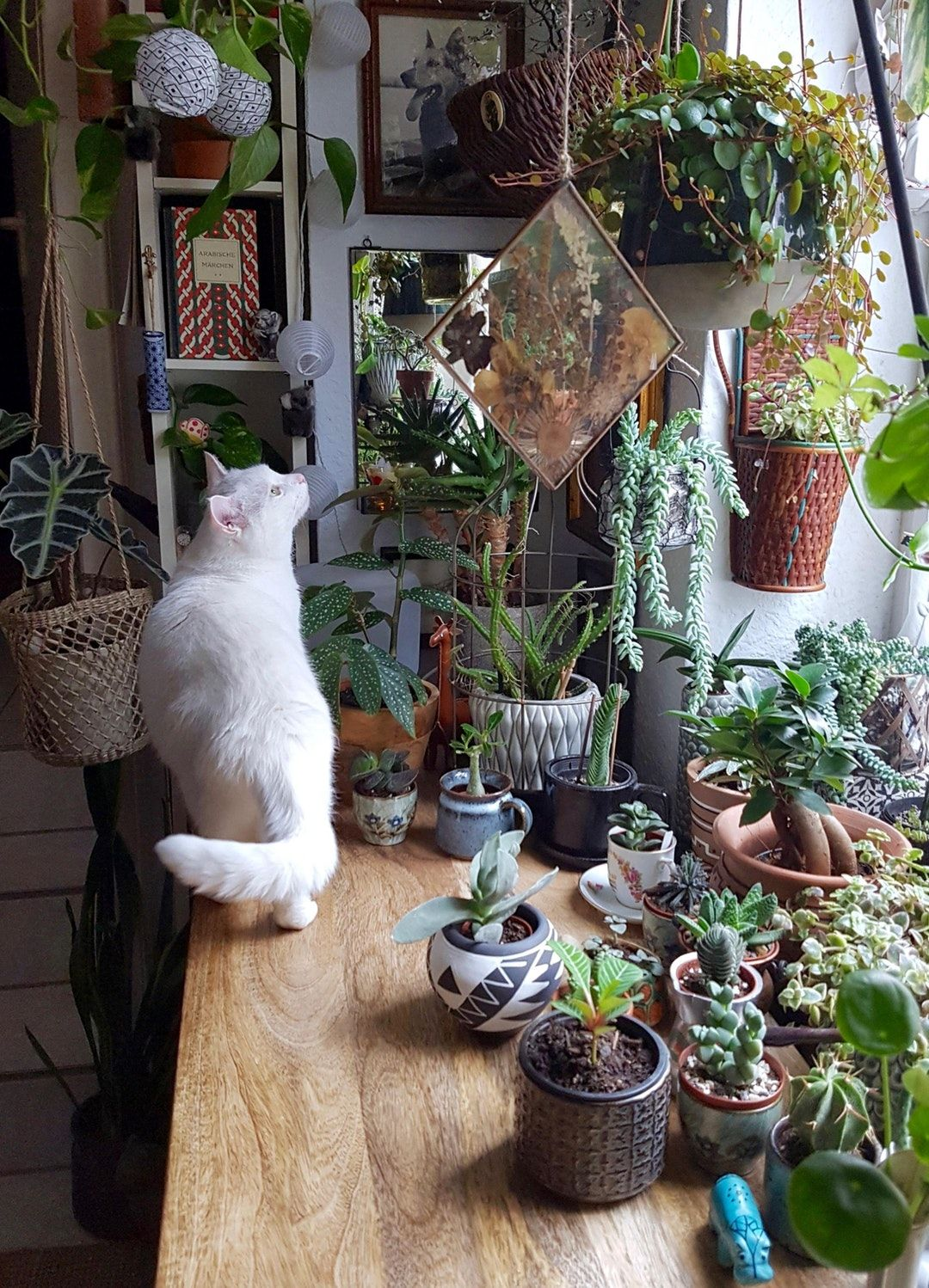 my cat and plant babies soaking in the spring sunshine