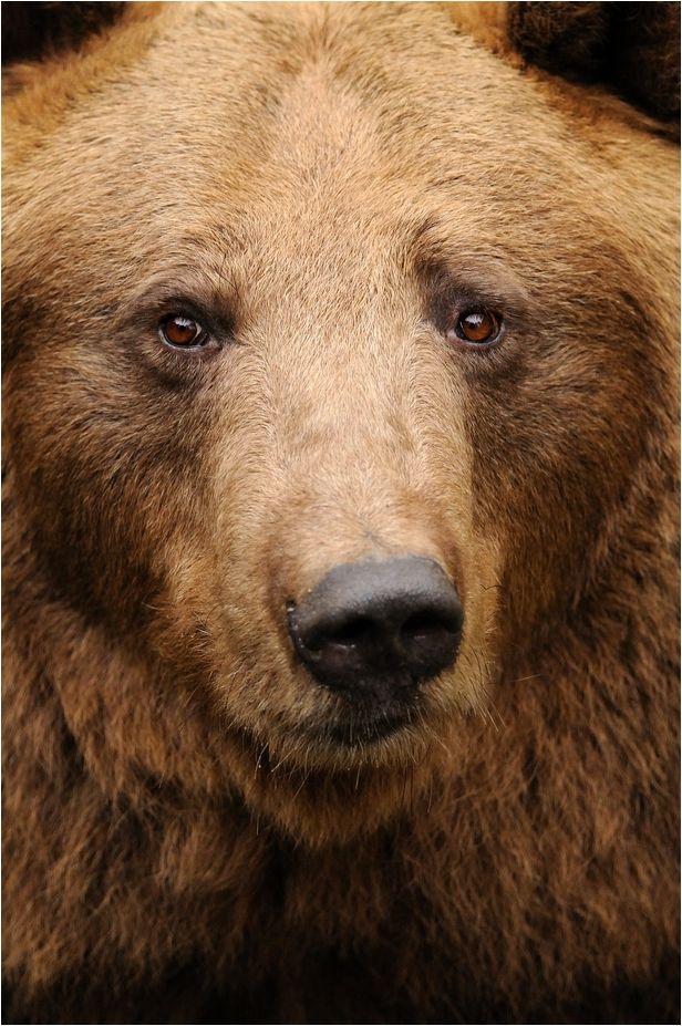 Teddy ❧ Bear ❧