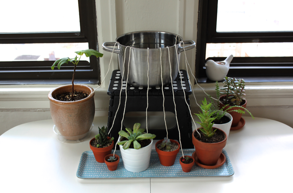Make This Diy Self Watering System For Your Houseplants