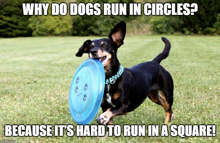 The Dachshund Runs In Circles Because It S Pretty Difficult To Run