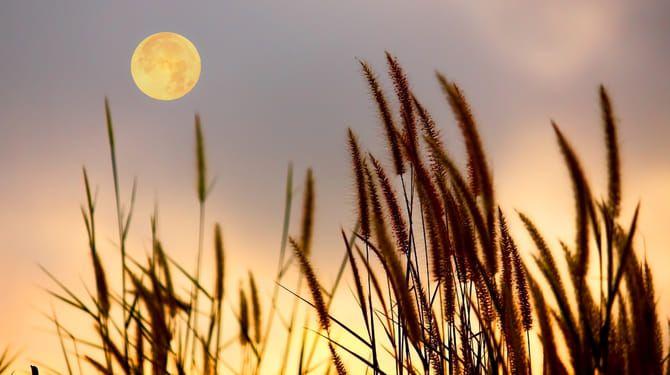 Naplánujte si práce v záhrade tak, aby vám Mesiac pomohol.