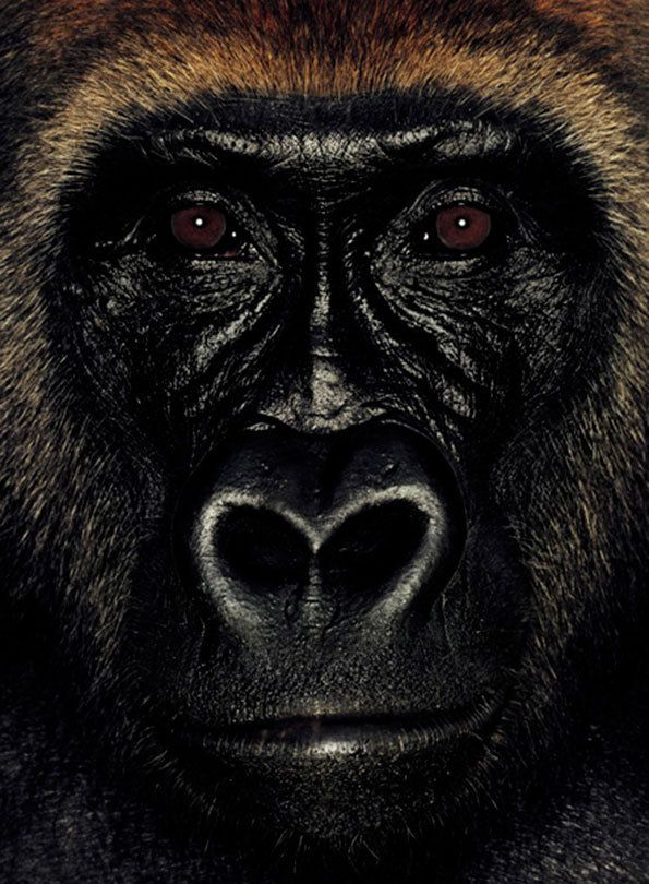 James Mollison: James and Other Apes