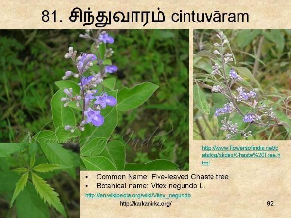 Pin By Vrikshaa On சங க இலக க ய மலர கள Flower Names Flowers Botanist