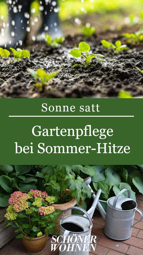 Kübelpflanzen in den Schatten stellen Bild 9 Pflanzen