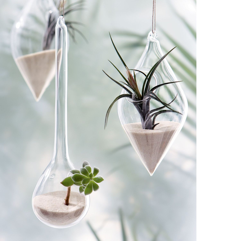 Uk seller hanging teardrop shaped glass bottle garden terrarium kit with airplant make your own - Kit terrarium plante ...