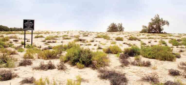 دليل لايفوتك عين قناص تقع بالإحساء بالقرب من قرية المراح تم الكشف عن مجموعة طبقات سكنية بموقع يعود إلى عصر العبيد لما يعود إلى Country Roads Road Country