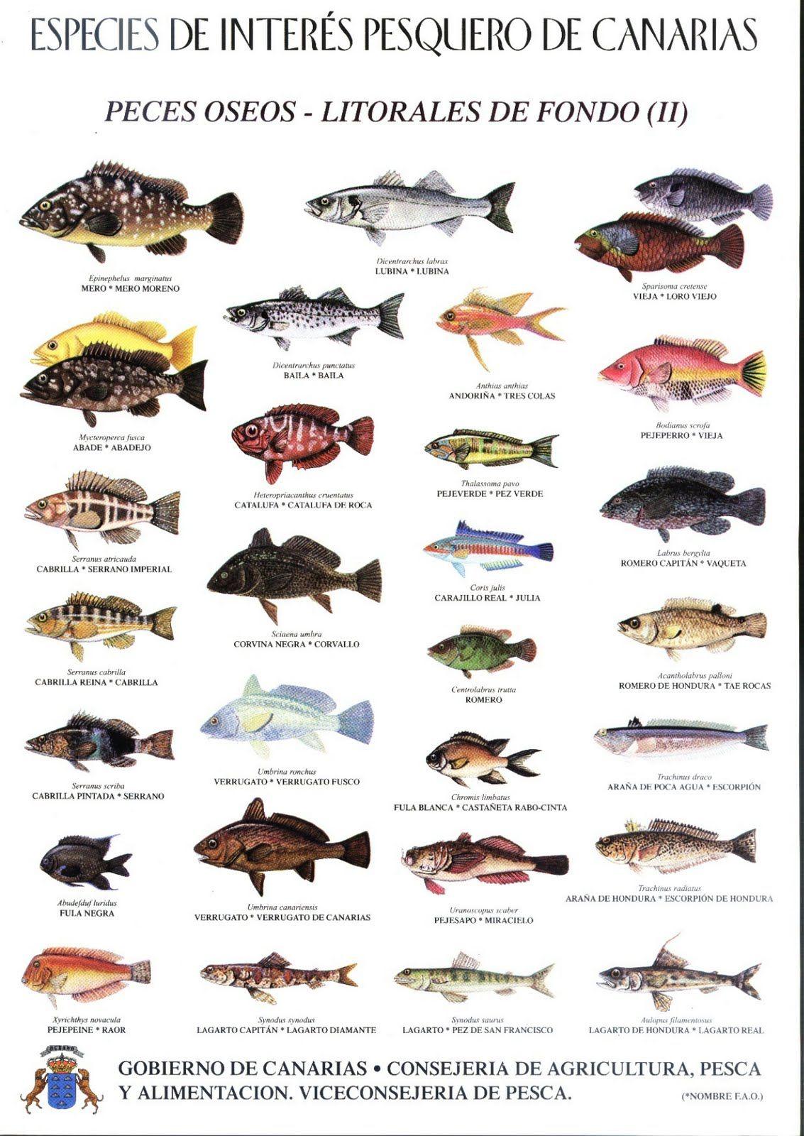 Aqu les dejo las especies de peces que se encuentran en for Especies de peces