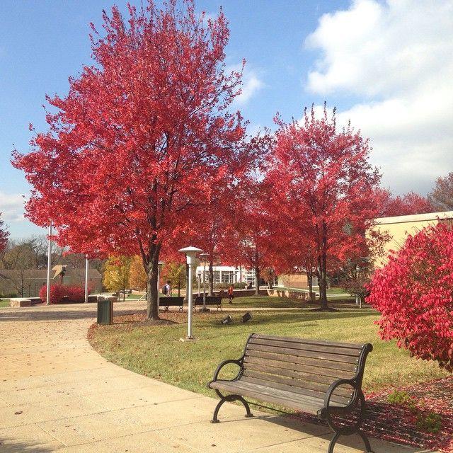 Beautiful November day on #Alvernia's campus
