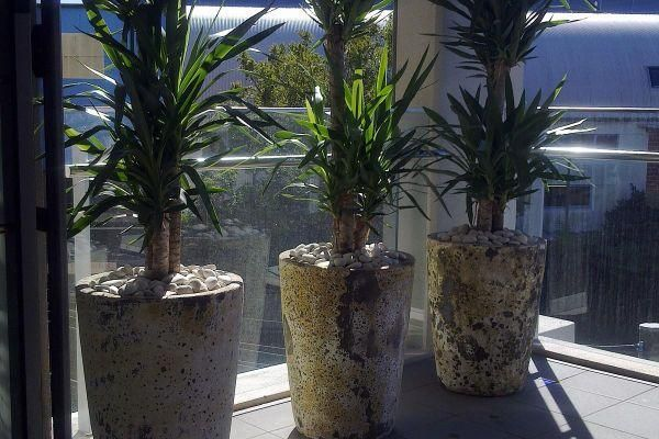 Combining multiple feature plants to create privacy screening ...