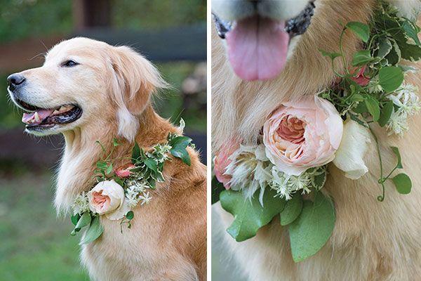 Pet Friendly Flowers Wildflower Florist Flower Delivery Wedding Flowers Summer Order Flowers Online