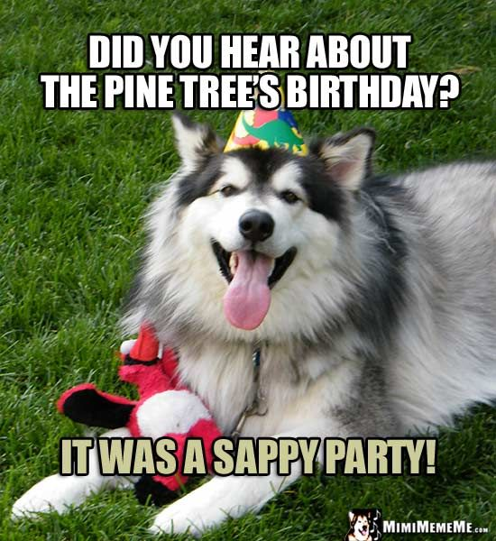 Birthday Dog Asks: Did You Hear About The Pine Tree's