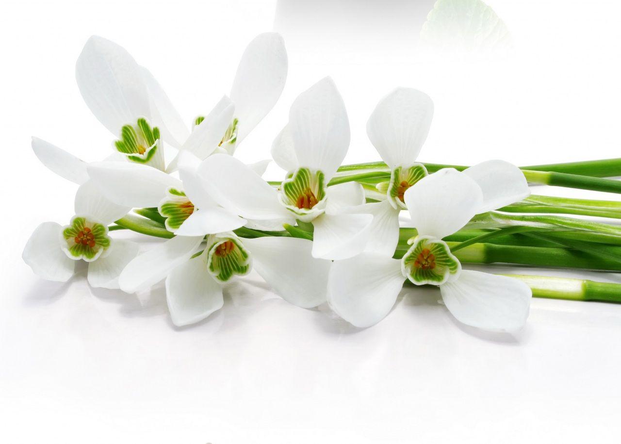 10 Beautiful Flowers 10 Gynyr Virg Megaport Media