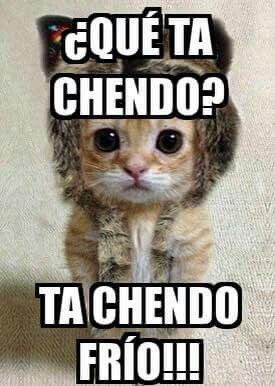 Gatito Cute Cats Photos Funny Animal Memes Animal Antics