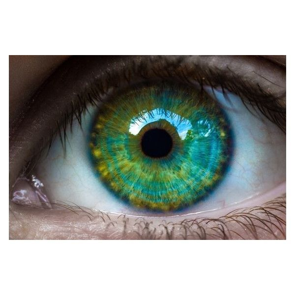 Mesmerizing Eyes Photography ❤ liked on Polyvore featuring beauty products and eyees