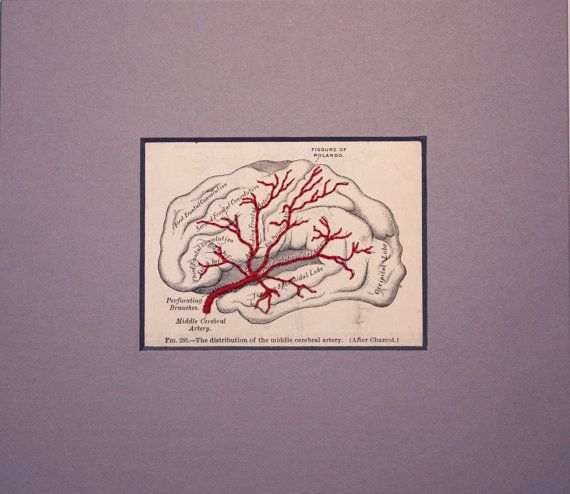 Brain - Gray\'s Anatomy Embroidery waaaay too expensive to buy, but i ...