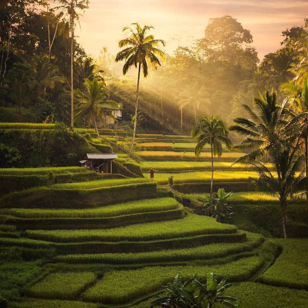 Tegalalang Rice Terraces Merupakan Spot Photo Yang Sangat Bagus Dengan Pemandangan Petak Petak Sawah Yang Dibuat Bertingkat Dan Pemandangan Bali Foto Langka