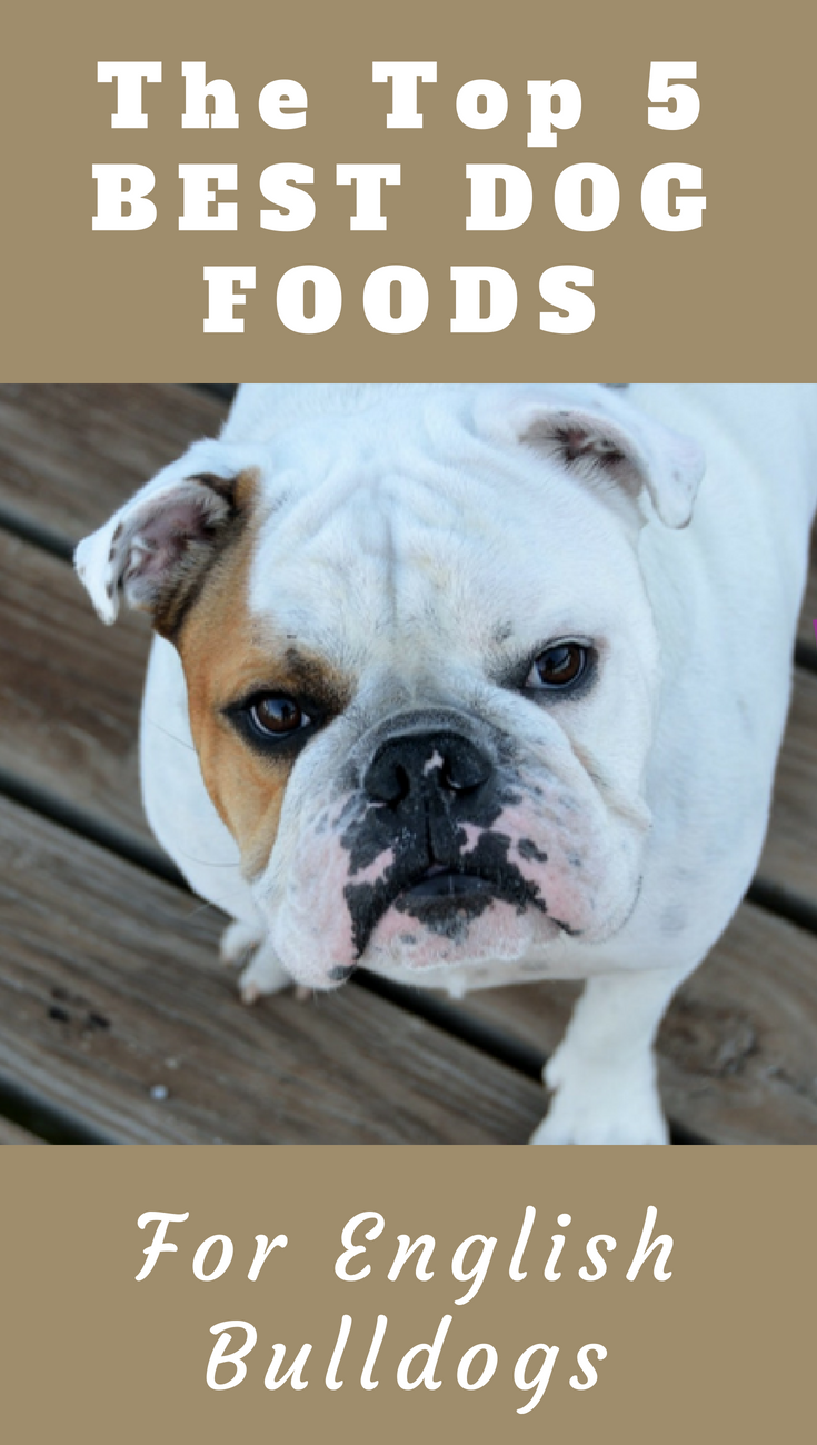 Top 5 Best Dog Food For English Bulldogs You Never Knew