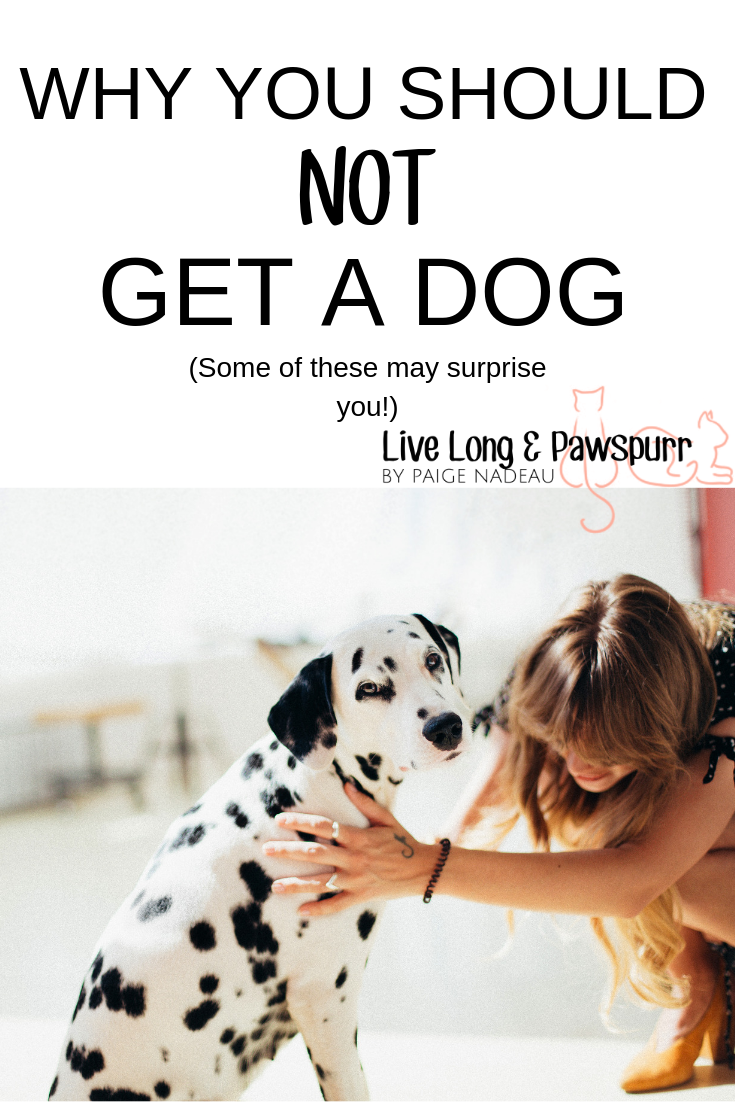 6 Reasons Why You Should Not Get A Dog Dog Adoption Quotes