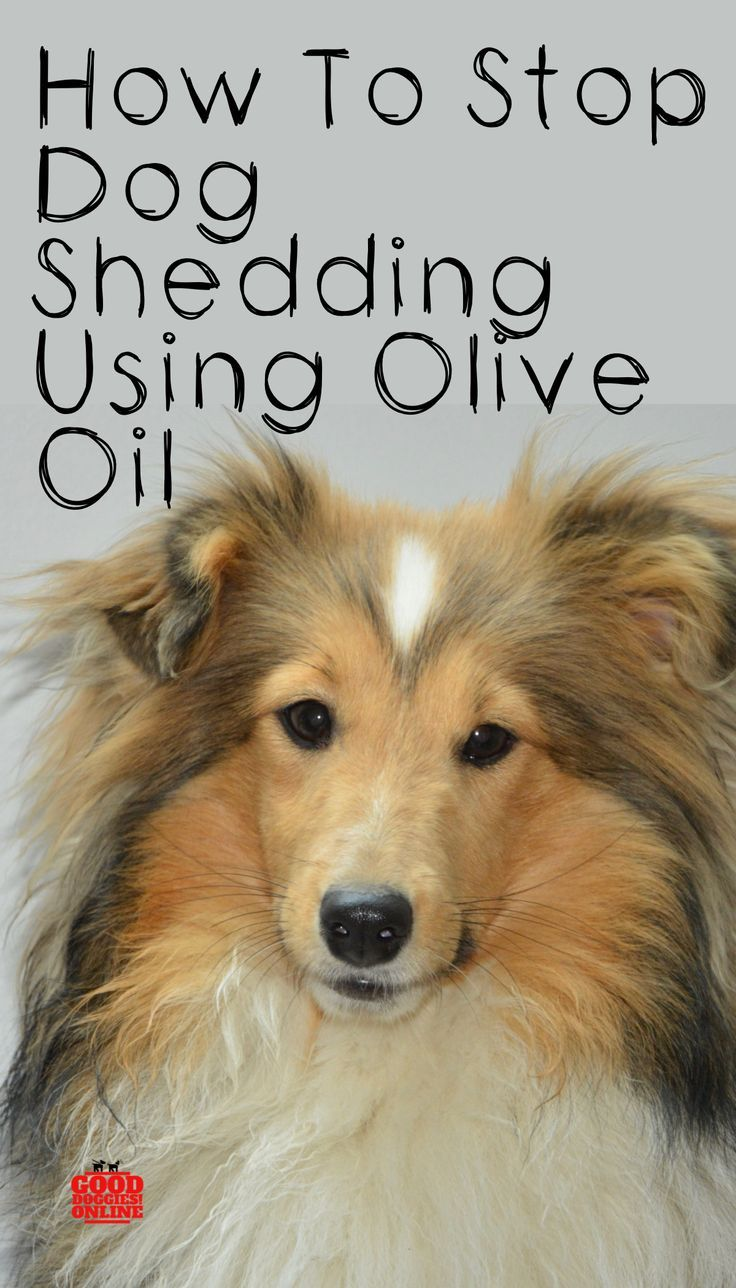 How to Stop a Dog From Shedding Using Olive Oil Dog